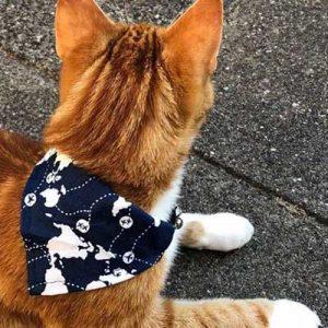 zakdoek-halsbandjes-kat-donkerblauw
