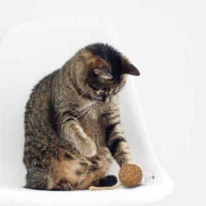 catnip-balletje-met-belletje-kat