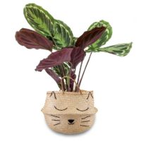 gevlochtend-mand-plant-kat