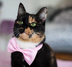 strikje-katten-halsbandje-roze