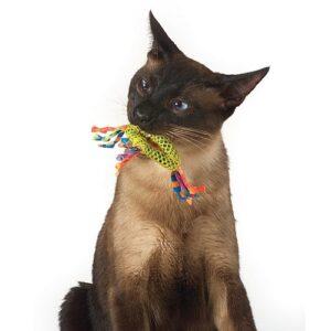 Dental-health-chew-gebit-speeltje-kat